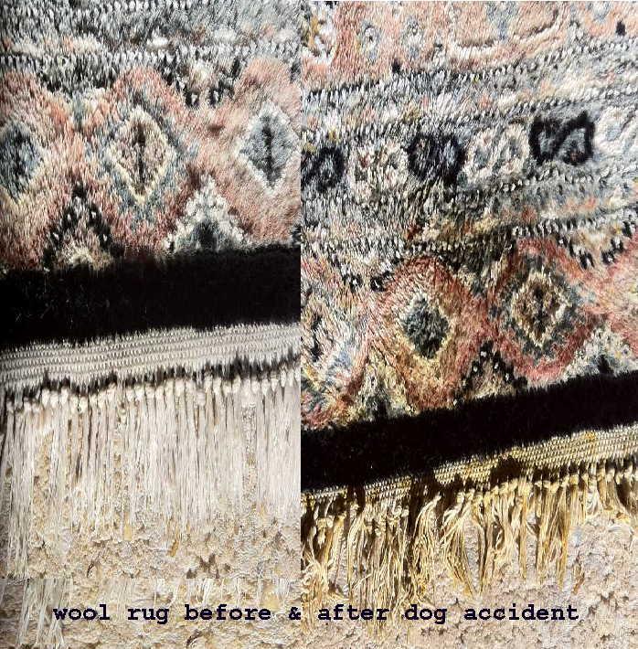 Danscarpet-vomit-stain