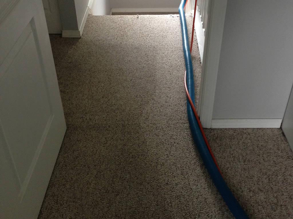carpet-d1